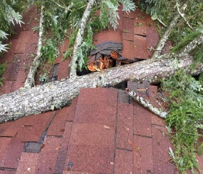 Fallen Tree Damages Roof in Snohomish